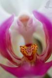 orchidej_arboretum_2_g